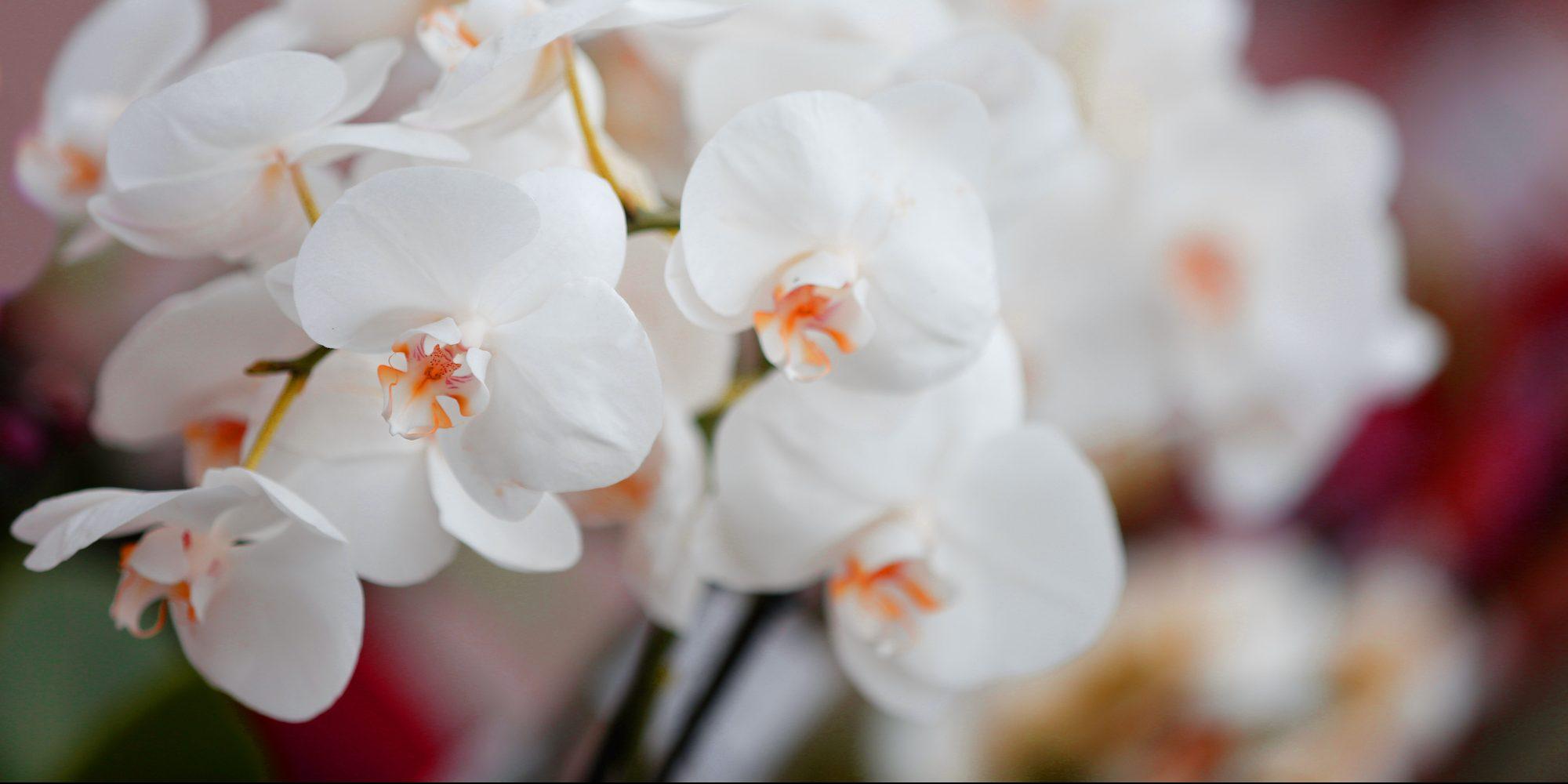 angebote aktionen m m orchideen. Black Bedroom Furniture Sets. Home Design Ideas