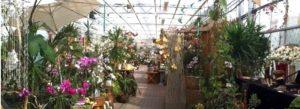 Bild der Verkaufsaustellung im Gewächshaus 1 bei M&M Orchideen