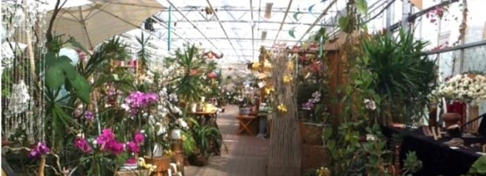 Verkaufsaustellung im Gewächshaus bei M&M Orchideen