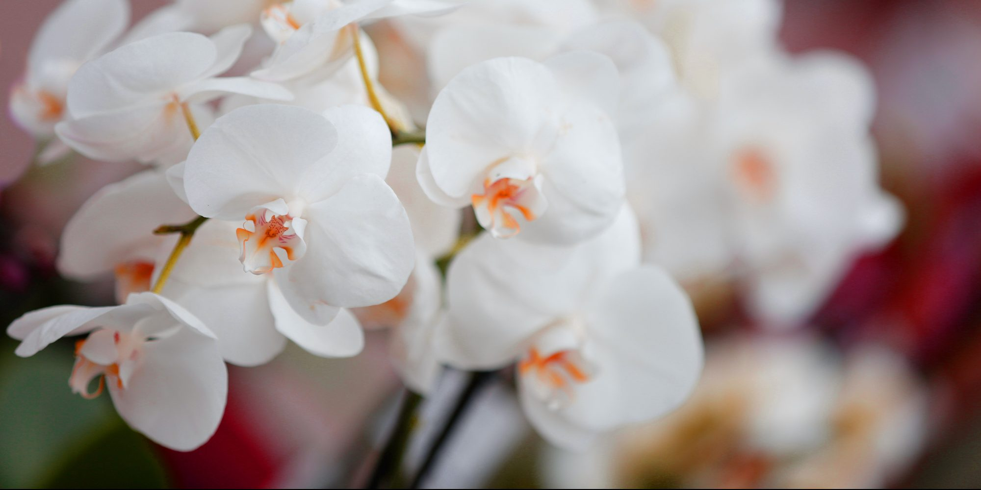 Orchidee Blüte © Tina Roth