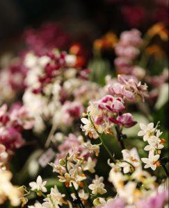 M&M M&M Orchideen in voller Blüte auf der Ausstellung © Tina Roth 2017
